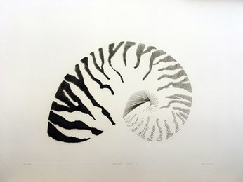 Nautilis Shell I
