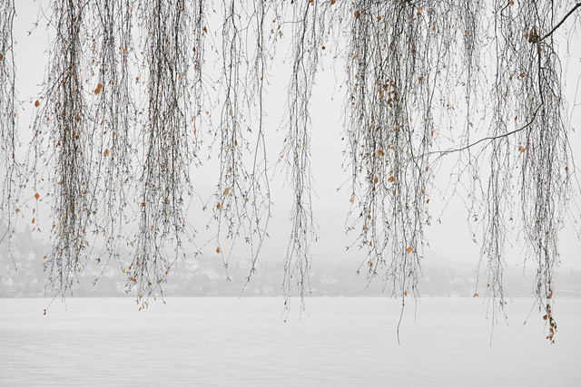 , 'Lake Trees No. 16,' 2004, Foto Relevance
