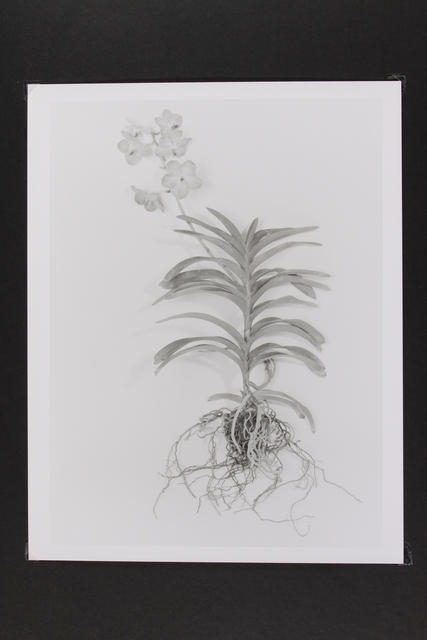 , 'Orchid,' 2014, Gallery LVS