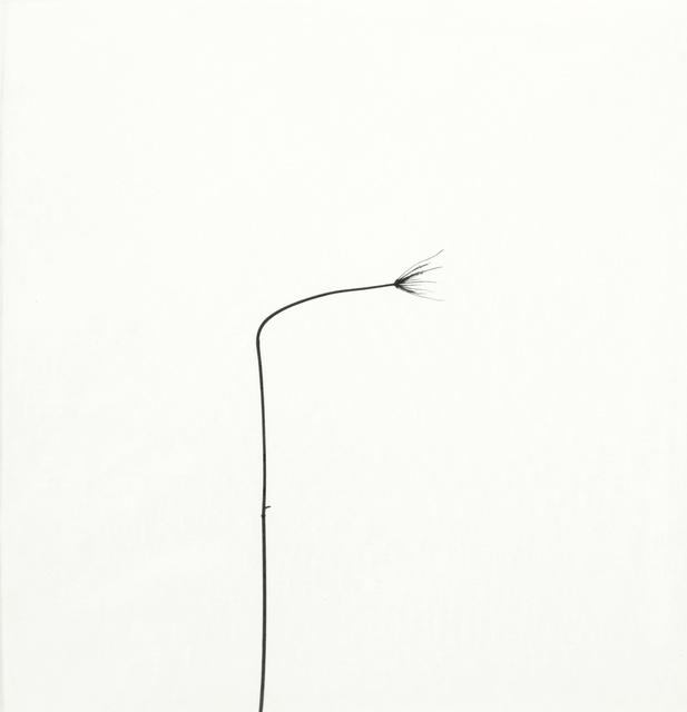 Harry Callahan, 'Weed Against Sky', Sotheby's