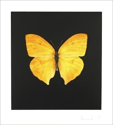 , 'Large yellow,' 2007, Vertu Fine Art