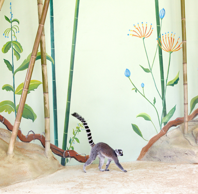 , 'Lemur and Bamboos,' , Galerie Dumonteil