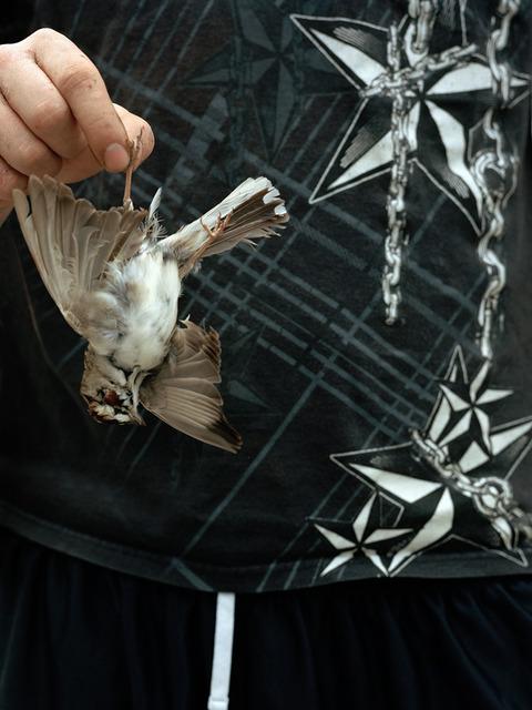 , 'Sparrow Road Kill,' 2013, Mitchell-Innes & Nash