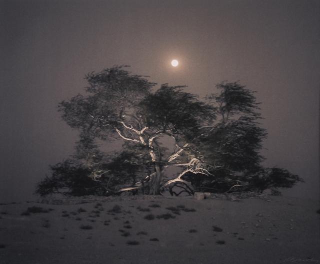 , ''Tree of Life' Mesquite, Full Moon Rising, Bahrain,' , Etherton Gallery