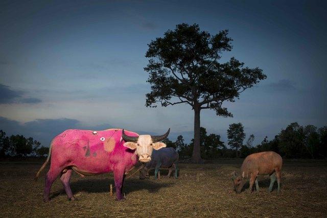 , 'Pink Miro - Save Thai Bufalo series ,' 2015, Yenakart Villa