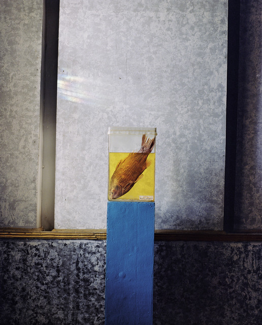 , 'Sea bream, part of a permanent exhibition of endangered species displayed at the History Museum of Aralsk, a former Soviet fishing port on the Aral Sea,' 2009, Magnum Photos