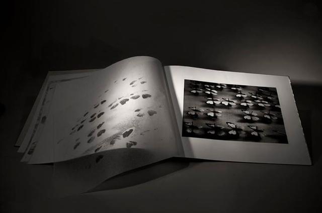 , 'Dark Red Cabinet (Lepidóptera),' 2014, Patricia Conde Galería