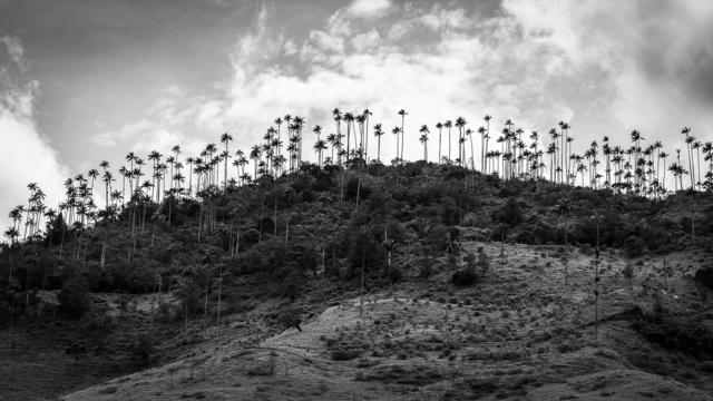 Damián Chiappe, 'Valle de Cocora', 2017, Baga 06 Art Gallery