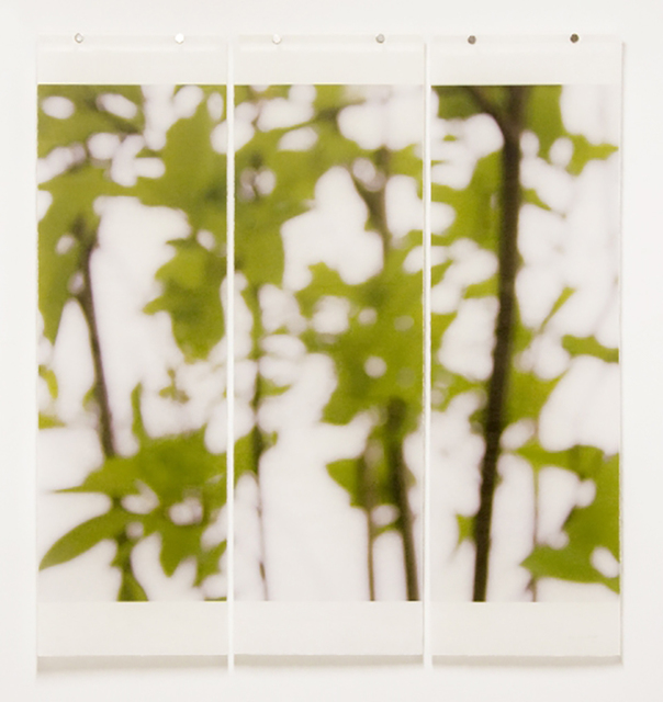 Jeri Eisenberg, 'First Foliage', 2009, Carrie Haddad Gallery