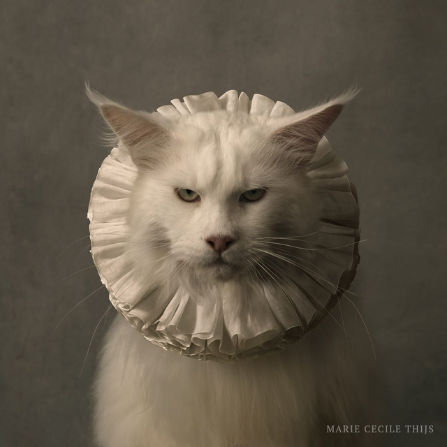 Marie Cecile Thijs, 'Cat with White Collar VII', 2017, SmithDavidson Gallery