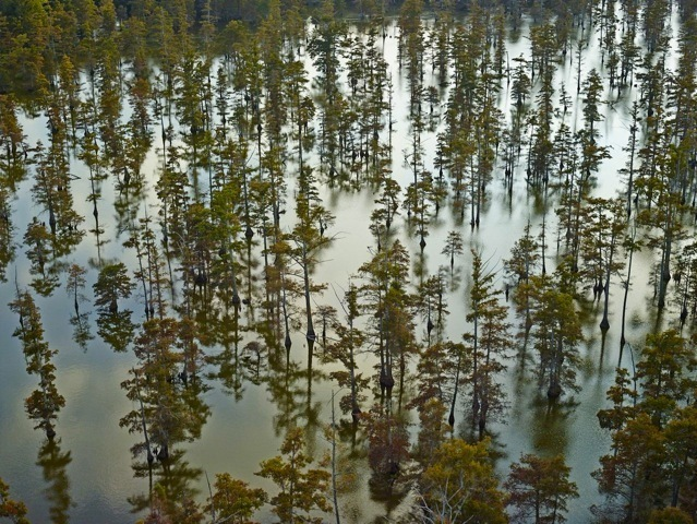 , 'Beaver Dam Lake I, Tunica, Mississippi,' 2014, Jackson Fine Art