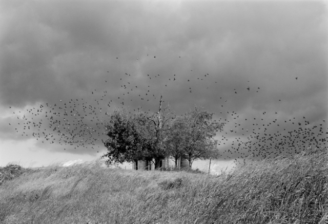 , 'Near Jefferson City, TN,' 1991, Jackson Fine Art