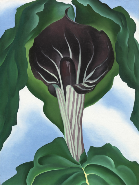, 'Jack-in-the-Pulpit No.3,' 1930, Norton Museum of Art