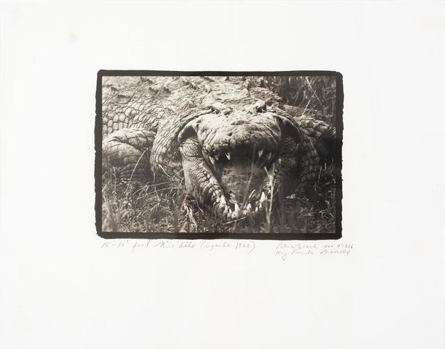 Peter Beard, 'Large Mugger Crocodile, Circa 15 - 16 Feet, Uganda', 1999, Itineris