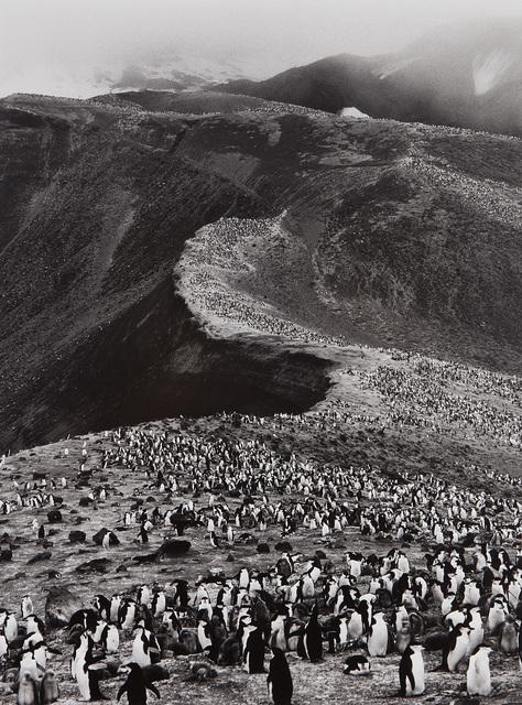 Sebastião Salgado, 'Chinstrap Penguins (Pygoscelis Antarctica), Deception Island, Antarctica', 2005, Phillips