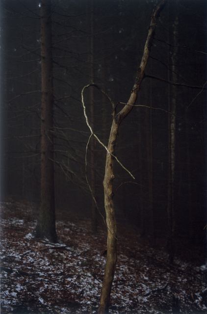 , 'Forest #4, Untitled (Dead Tree Dancing),' 2005, Yancey Richardson Gallery