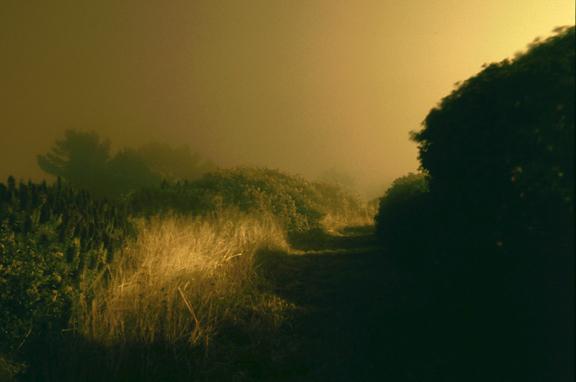 William Farley, 'Meadow - Diamond Heights, San Francisco, CA', 2010, Dolby Chadwick Gallery