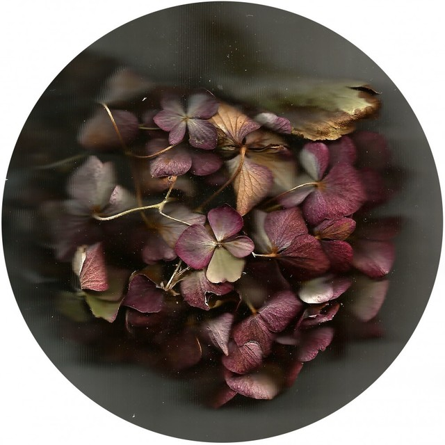 , 'Bouquet Mauve,' 2016, Luisa Catucci Gallery