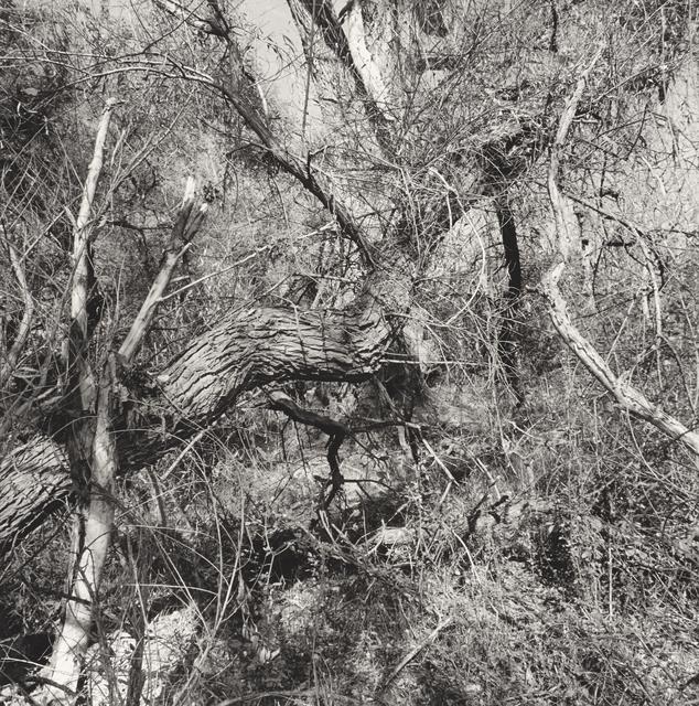 , 'Patagonia, Arizona,' 1997, Pace/MacGill Gallery