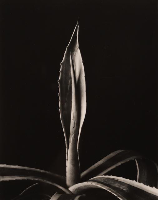 , 'Agave Americanus,' 1920, Seagrave Gallery
