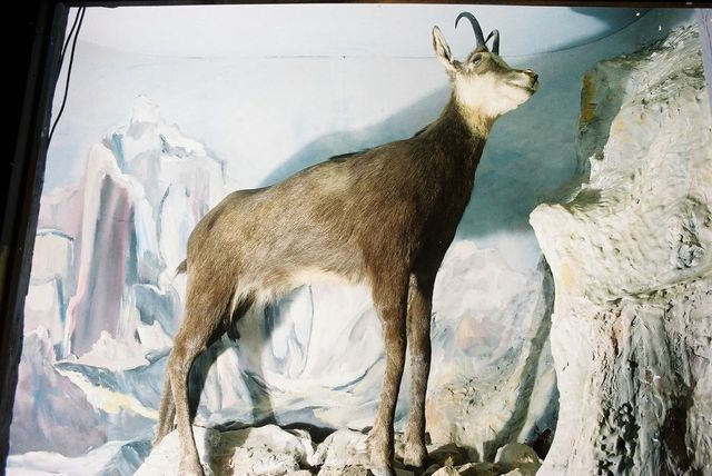 Petrit Halilaj, 'Special edition (ex-Natural History Museum of Kosovo) (37)', 2013, ChertLüdde