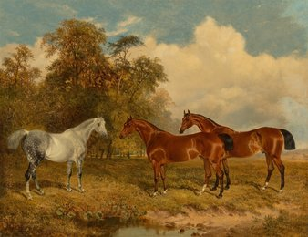 Two bay horses and a dappled grey in a field with trees on the left