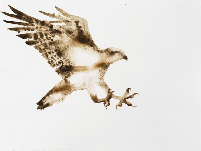 , 'Osprey (Pandion haliaetus),' 2014, Parrish Art Museum