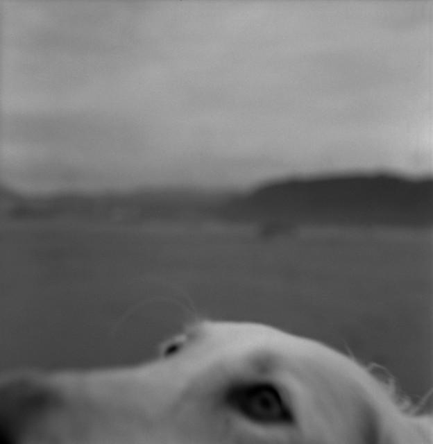 , 'El lamento de un perro,' 2012, Galería Juana de Aizpuru