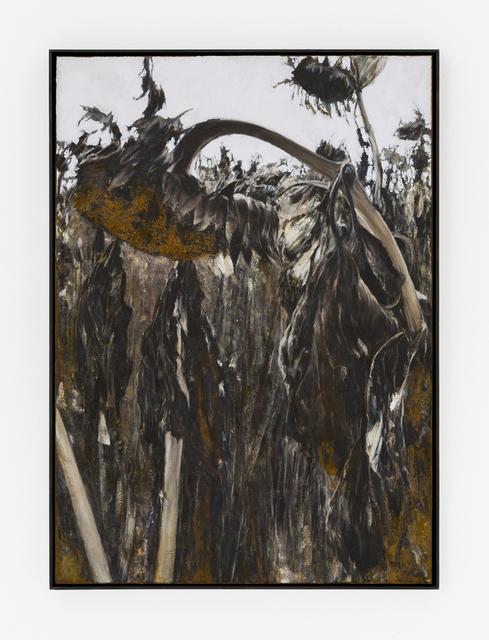 , 'Feldstudie I,' 2018, mianki.Gallery