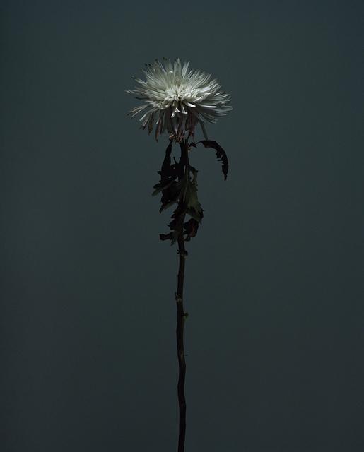 , 'fig. XXV,' 2017, Galerie SOON