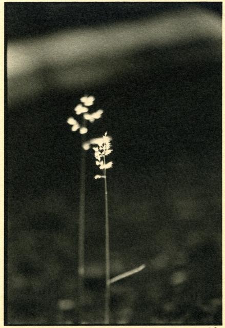 , 'Slow Movement,' , Soho Photo Gallery