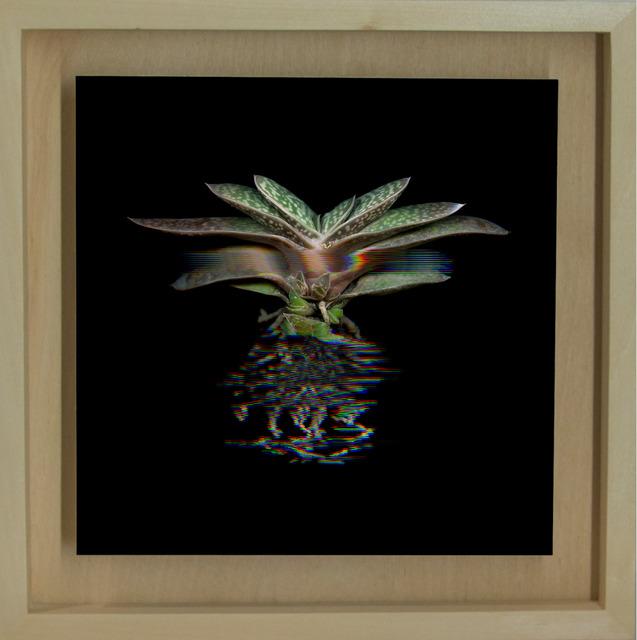 Márk Martinkó, 'Digitized Plants No.14', 2014, MyMuseum