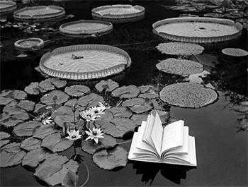 , 'Lecciones de botánica, Suiza,' 1997, Blanca Berlín