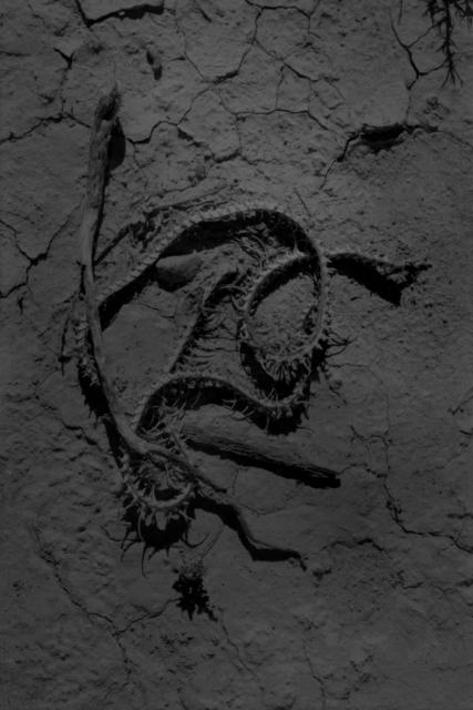 , 'Snake, San pedro torreon, Mexico,' 2017, Inda Gallery