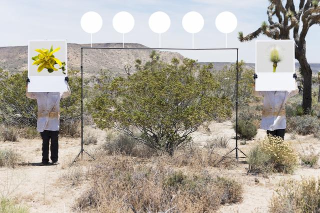 , 'Larrea Tridentata -Creosoto,' 2017, Joshua Tree Art Gallery