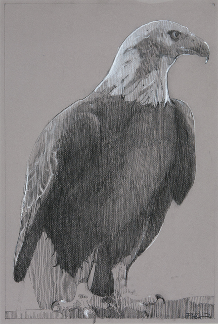, 'Bald Eagle 2,' , Dowling Walsh