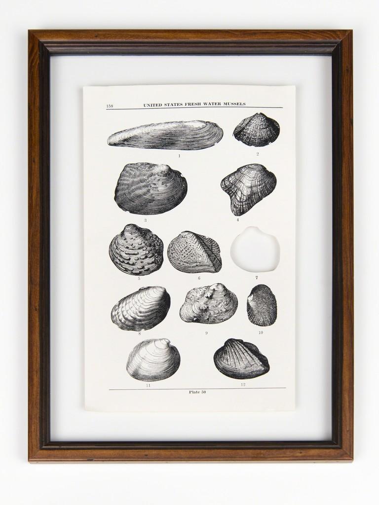 RIP Stirrup Shell Freshwater Mussel: After Walter Freeman Webb, 1942