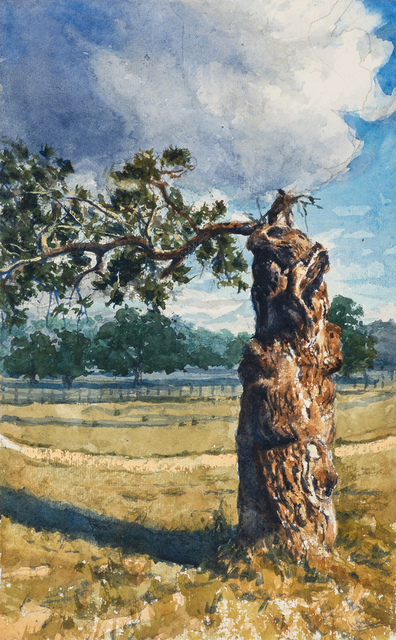 Bob Stuth-Wade, 'Gnarled Tree, Proctor', 2018, Valley House Gallery & Sculpture Garden