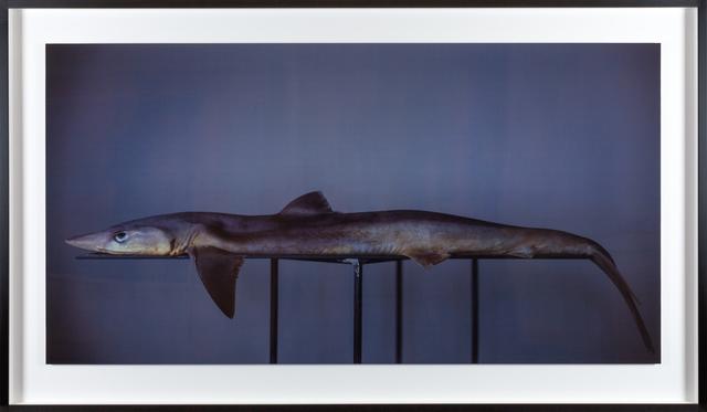 , 'Shark (deeper blue),' 2009, Fraenkel Gallery