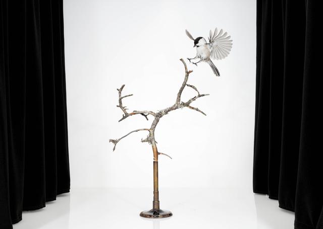 , 'Poecile montanus 2,' 2015, Helsinki Contemporary