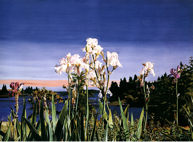 , 'White Irises/Evening,' 1988, Nancy Hoffman Gallery