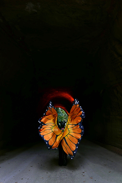 , 'Butterfly Effect 2,' 2017, TARQ