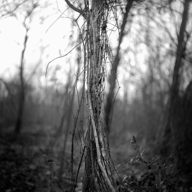 , 'Pecan Grove, Bo Bo, Mississippi,' 2010, Pictura Gallery