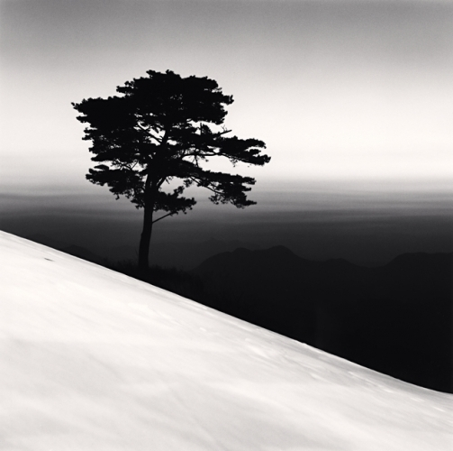 , 'Mountain Tree, Danyang, Chungcheonbukdo,' 2011, Robert Mann Gallery