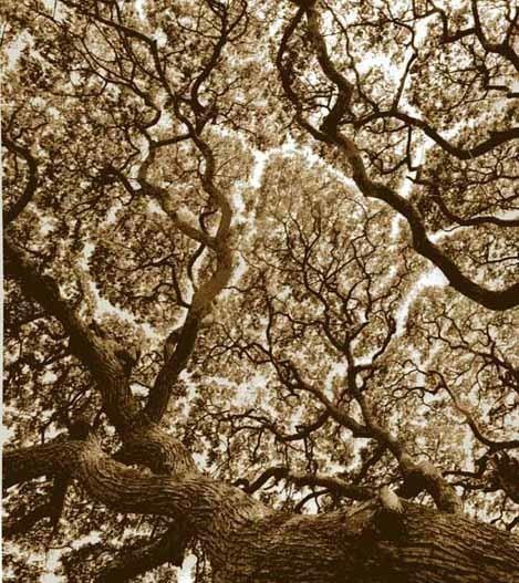 , 'Tree, Anuradhapura, Sri Lanka,' 2005, Winston Wächter Fine Art