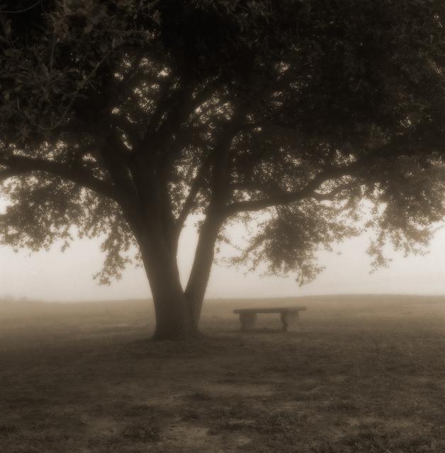 , 'Oak with Bench ,' , Paraphé
