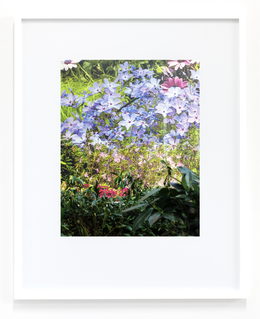 , 'Untitled (Flowers),' 2018, Magenta Plains