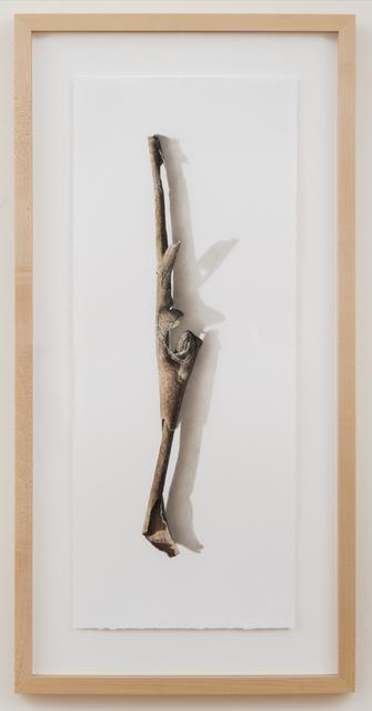 , 'Sycamore Series No. 3,' 2003, Garvey | Simon