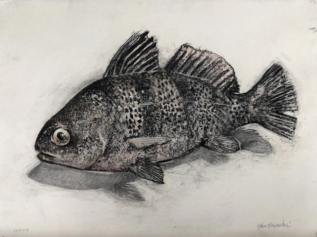 John Alexander, 'Black Drum Fish', 2014, Drawing, Collage or other Work on Paper, Charcoal and watercolor on paper, McClain Gallery