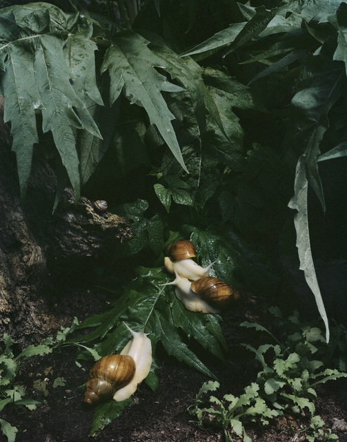 ", 'Untitled #7, from the series ""Understory"",' 2015, Tracey Morgan Gallery"